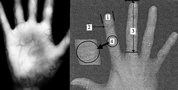 Измерение рисунка вен и геометрии рук