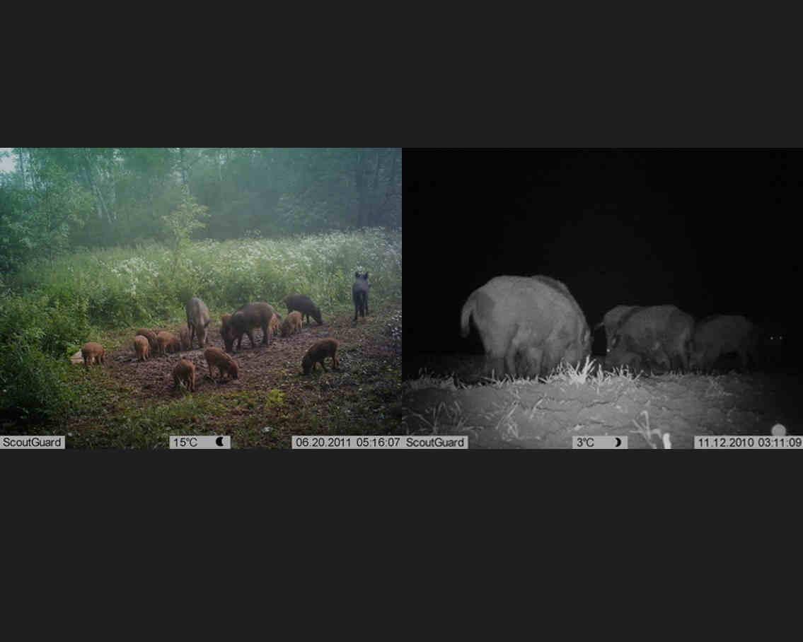Результат работы фотоловушки в дневное и ночное время